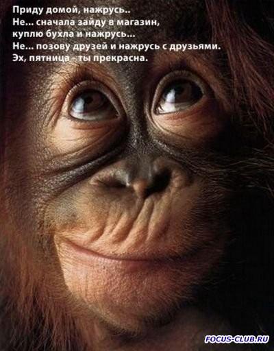 С пятницей  - 1409309326_raznoobrazie-pro-pyatnicu-3.jpg